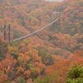 写真: 紅葉の中の空中散歩