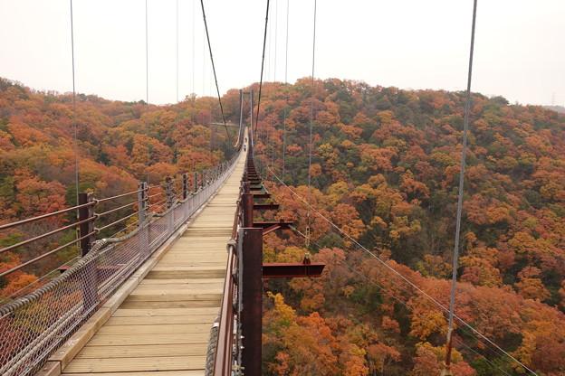 紅葉の中を散歩できます