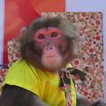 写真: お猿のショー♪
