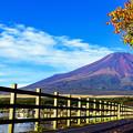 写真: 秋之富士