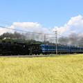 写真: 東武本線C11 207+ヨ8634+14系+DE10 1099 SL大樹