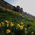 写真: 城壁の街ヨーク
