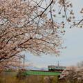 写真: 春の飯田線#1