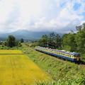 写真: しなの鉄道115系(復刻版横須賀色)