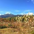 写真: 秋風に