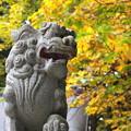 Photos: 戸隠神社#3