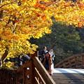 写真: 秋を彩る