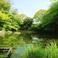 写真: 水面に映る緑