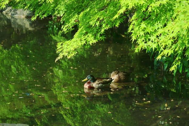 写真: 葉陰で一休み