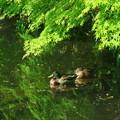 Photos: 葉陰で一休み