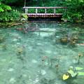 写真: モネの池