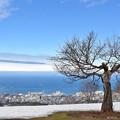 写真: 藍天白雲雪地小樽天狗山