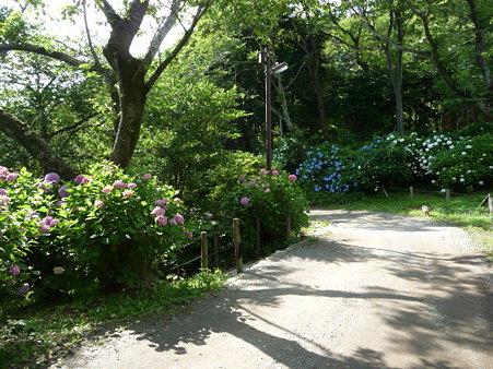 090612-源氏山・葛原が丘 (9)