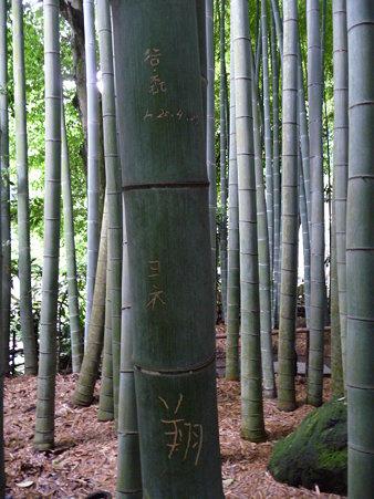 090625-イタズラで傷付いた竹 (1)