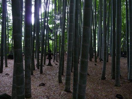 090625-竹林散策 (10)