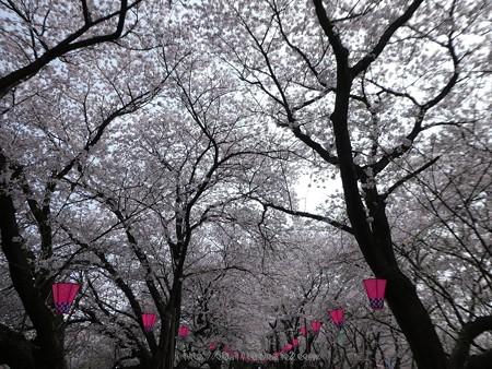 170410-権現堂堤 (41)
