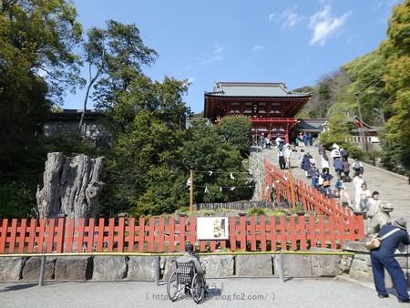 170413-鶴岡八幡宮 (7)