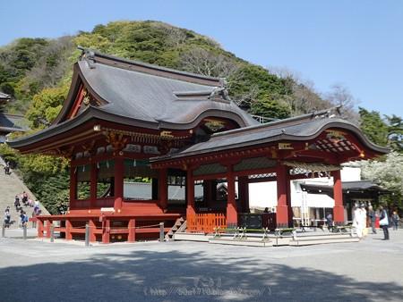170413-鶴岡八幡宮 (25)