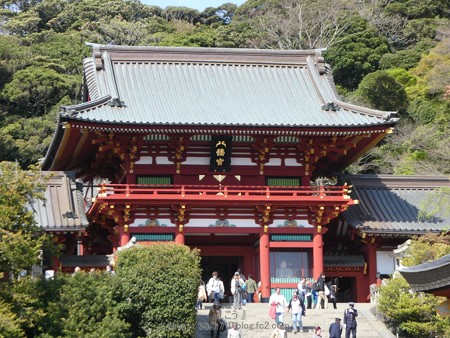 170413-鶴岡八幡宮 (26)