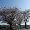 Photos: 170414-海軍道路 (30)