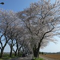 Photos: 170414-海軍道路 (49)
