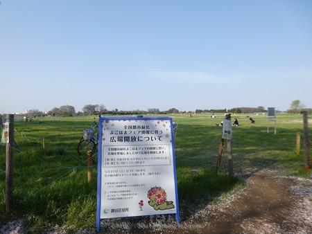 170414-上瀬谷原っぱ (21)