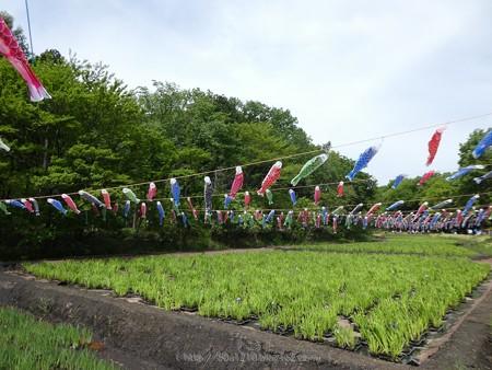 170503-里山ガーデン (41)