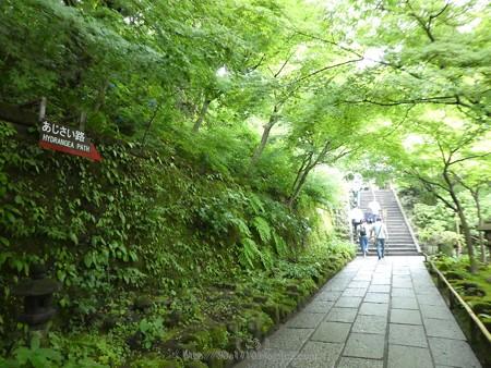 170628-鎌倉 長谷観音 (3)