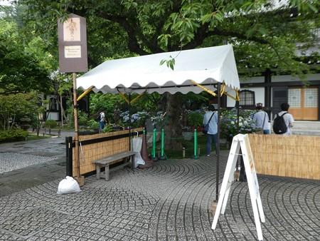 170628-鎌倉 長谷観音 (5)