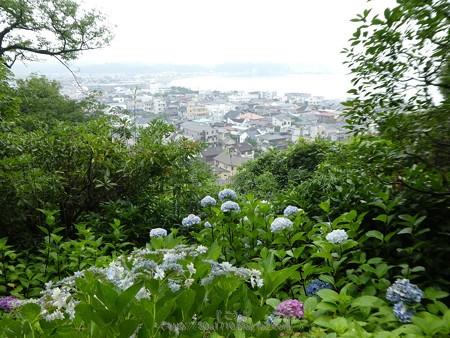 170628-鎌倉 長谷観音 (68)