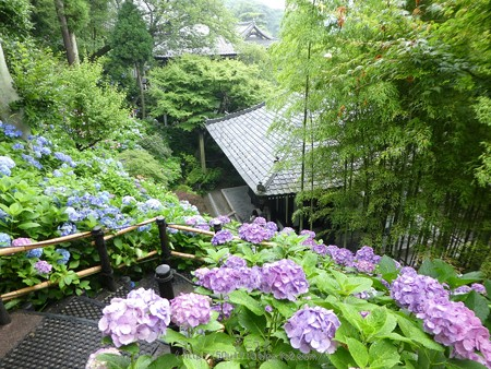 170628-鎌倉 長谷観音 (125)