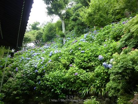 170628-鎌倉 長谷観音 (155)