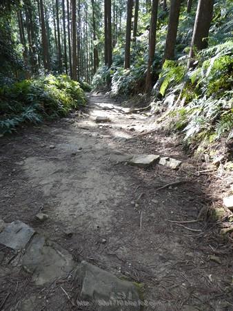 160325-熊野古道 小辺路 (50)