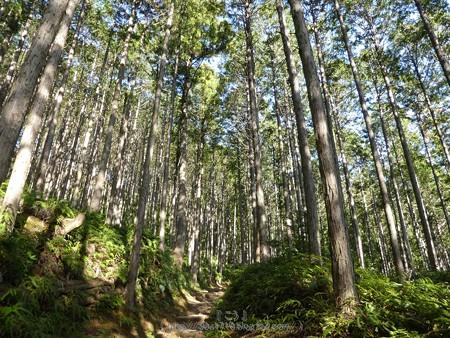 160325-熊野古道 小辺路 (54)