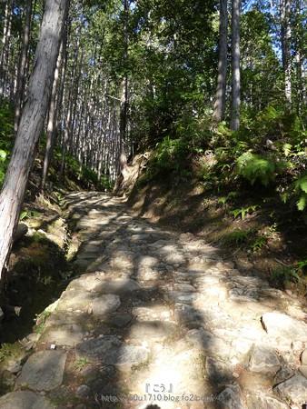 160325-熊野古道 小辺路 (57)
