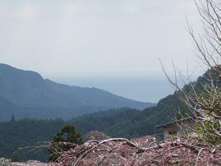 160324-熊野那智大社 熊野古道 (3)