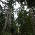 160324-熊野古道 大門坂 (83)