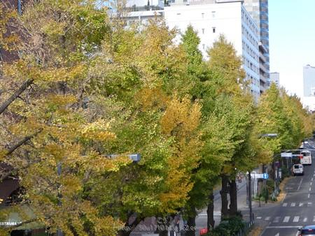 171112-山下公園通り (10)