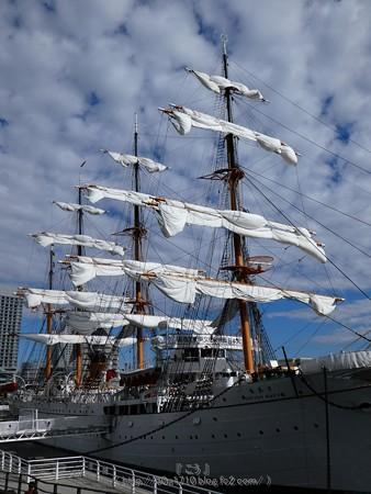 171112-日本丸 総帆展帆 (60)