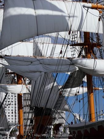 171112-日本丸 総帆展帆 (80)
