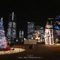 Photos: 171221-ワールドポーターズ クリスマスツリー (8)