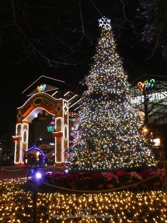 171221-ワールドポーターズ クリスマスツリー (13)