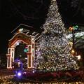 Photos: 171221-ワールドポーターズ クリスマスツリー (13)