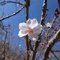 Photos: 180110-日本平ホテル (55)