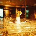 Photos: フィルムカメラで撮影 太陽の塔模型