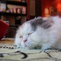 良い寝顔の猫
