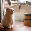 しかめっ面?白猫