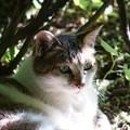 写真: ふわっとした毛並みの猫