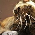立派なひげの猫