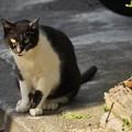 Photos: 黒白猫